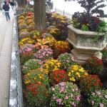 Michigan Avenue plants