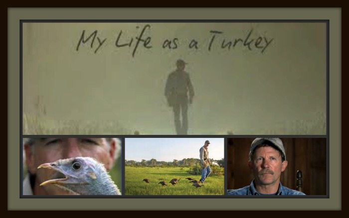 my life as a turkey joe My life as a turkey has something of grizzly man about it – a man obsessed, alone in a beautiful place, living with wild animals but, although joe was attacked, he didn't end up inside one of.